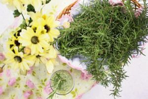 Veggi Palate Herbs Rosemary
